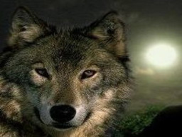 WolfeMyst Resident's Profile Image
