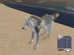Alaskansnowwolf Barkley