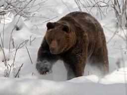 blacky Bigbear