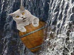 barrelcat Resident's Profile Image