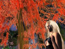 Blondee Stardust