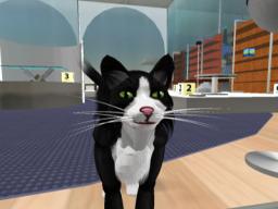Katz Ninetails
