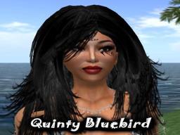 Quinty Bluebird